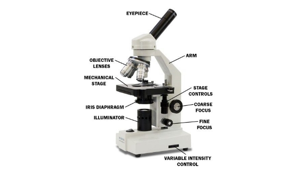 parts of a compound light microscope diagram lucas tvs wiper motor wiring ultimate quiz on and functions - proprofs