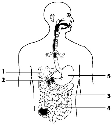 How Well Do You Know About Human Body System? Trivia Quiz