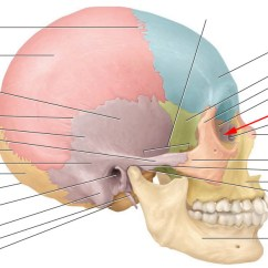 Blank Spine Diagram Wiring Plc Star Delta Facial Bones And Markings Flashcards By Proprofs