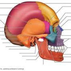 Fill In The Blank Anatomy Diagrams Genie Excelerator Wiring Diagram Bones Of Skull Flashcards By Proprofs