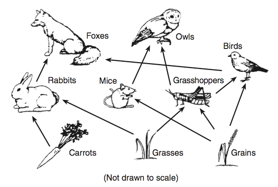 Migrating Birds Diagrams Science Quiz Part 1 Proprofs Quiz