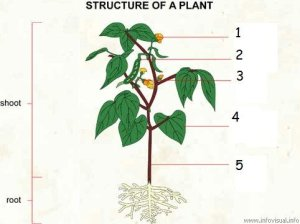 Plant Biology  5th Grade  ProProfs Quiz