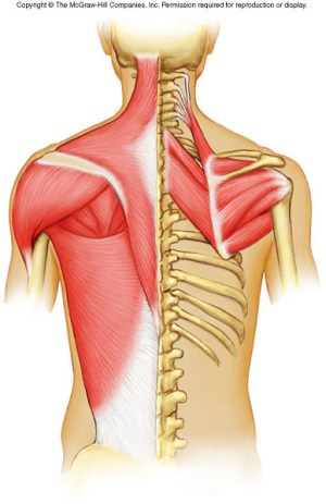 Axial Muscles  ProProfs Quiz