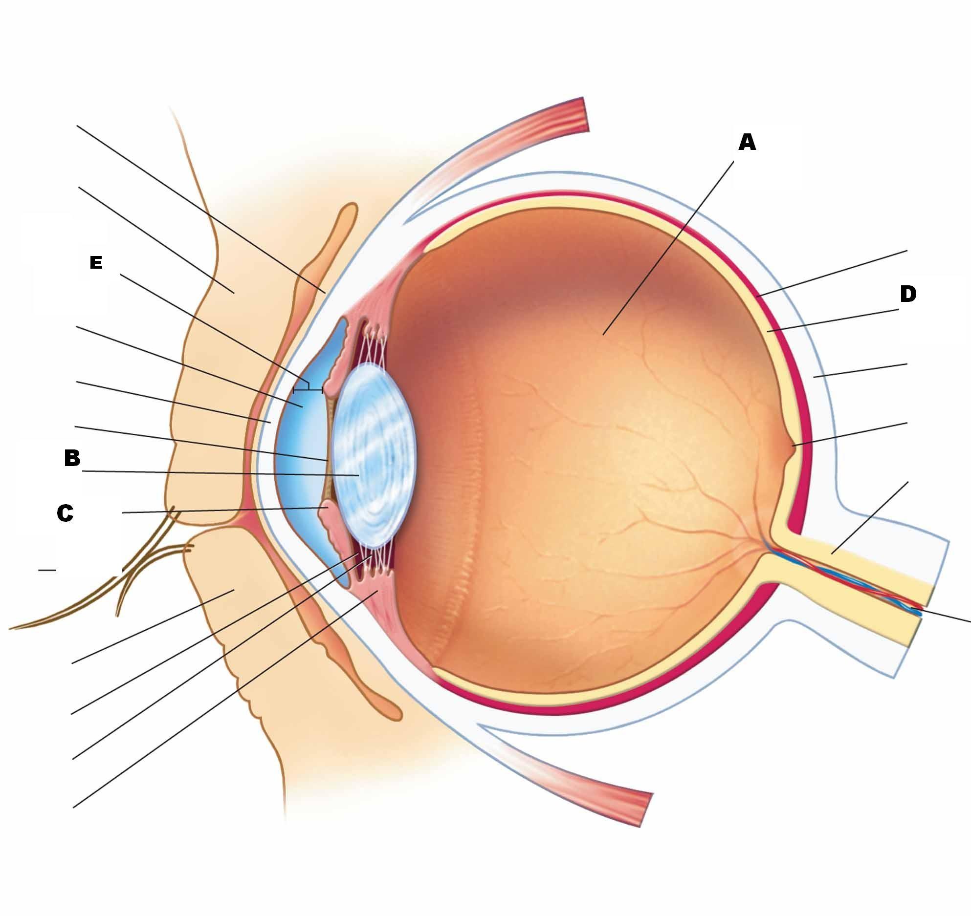 eye labeling diagram quiz idealarc welder anatomy and physiology ii test iii proprofs