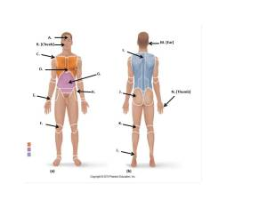 Unit I: Language Of Anatomy  ProProfs Quiz