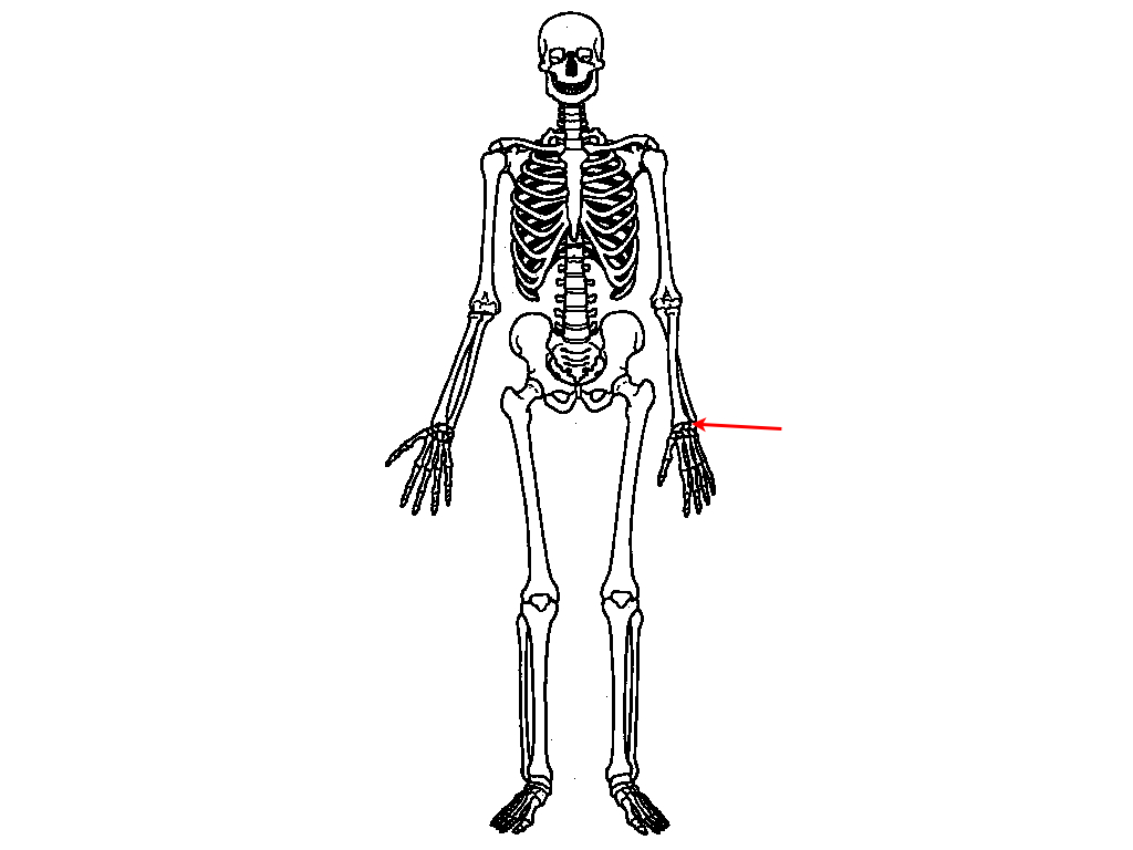scapula diagram quiz gibson 3 pickup wiring upper skeleton proprofs