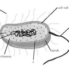 Plant Cell Diagram And Labels Internal Wiring Organelles - Proprofs Quiz