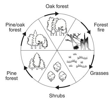 Evolution Of Plants Diagram, Evolution, Free Engine Image