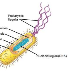 Cilia Animal Cell Diagram 2007 Chevy Avalanche Parts College Biology Quiz - Proprofs