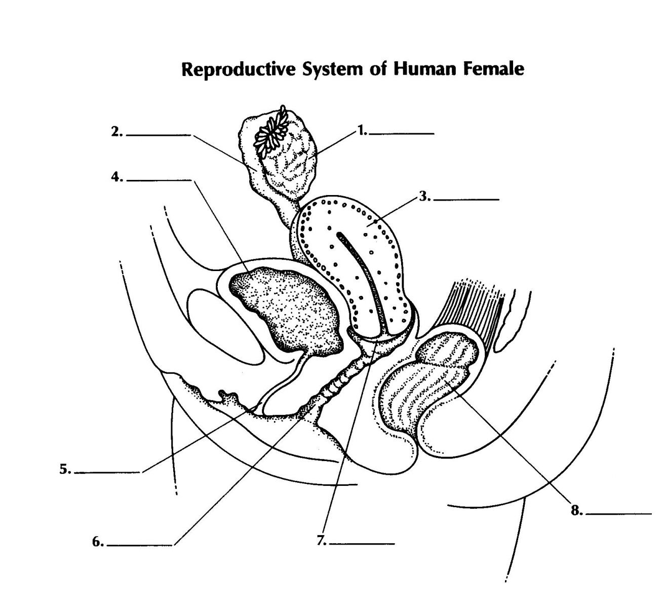 Quiz On Reproductive System Of Female