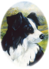 A postcard picture of a sheepdog.