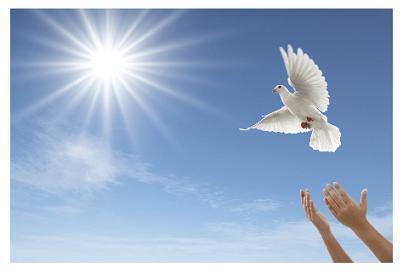 white dovel
