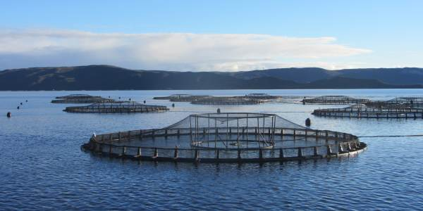 Edition156_Tassal_Fish_farm_Macquarie_harbour