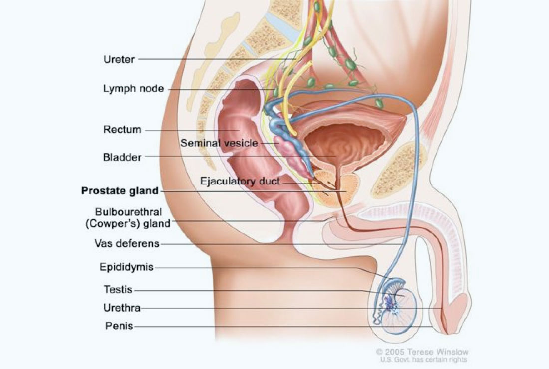 hight resolution of here are some helpful sound bites welcome to our know your prostate section using the the navigation below you can learn more about the prostate and