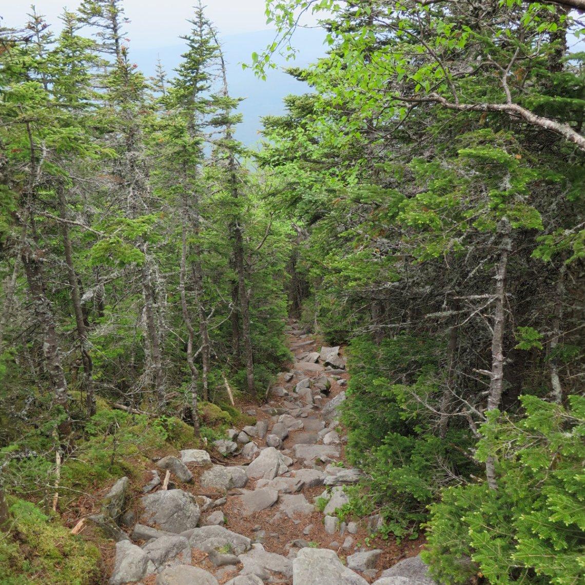 Downhill-Trail-20180618