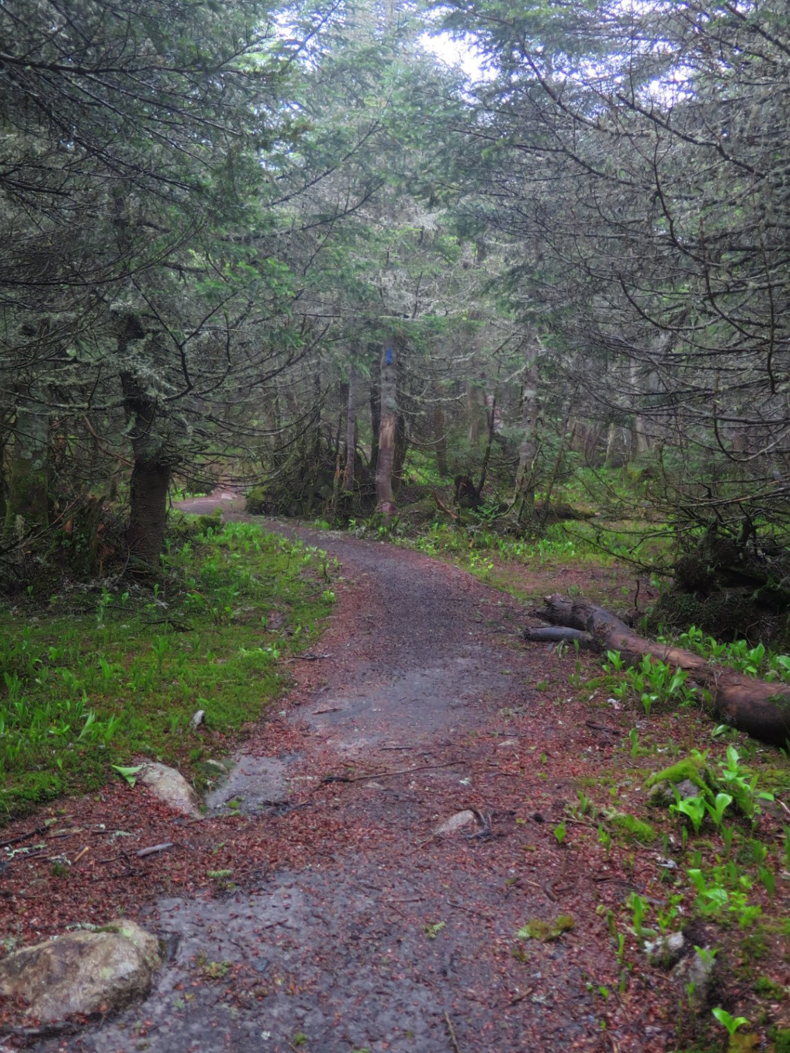 STwin-Trail-20180614