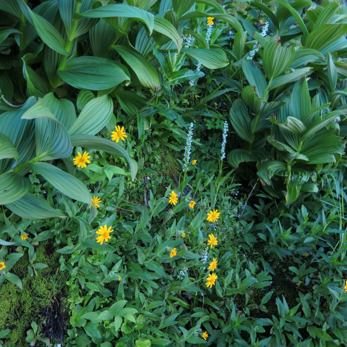 Washington-Wildflowers-20180721