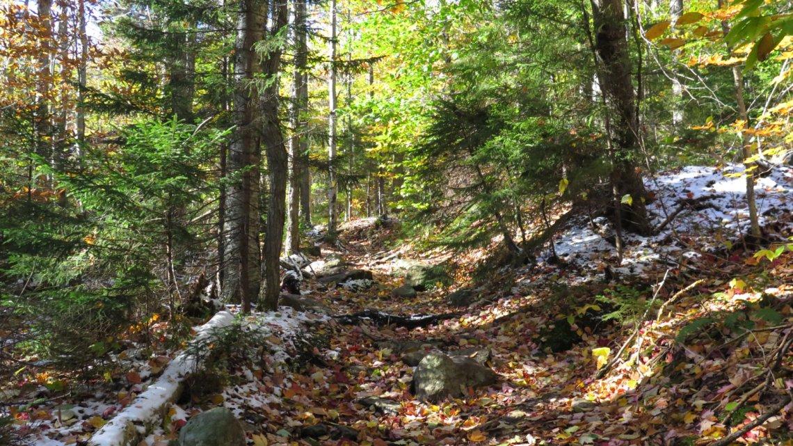 20181018-Cardigan-Trail