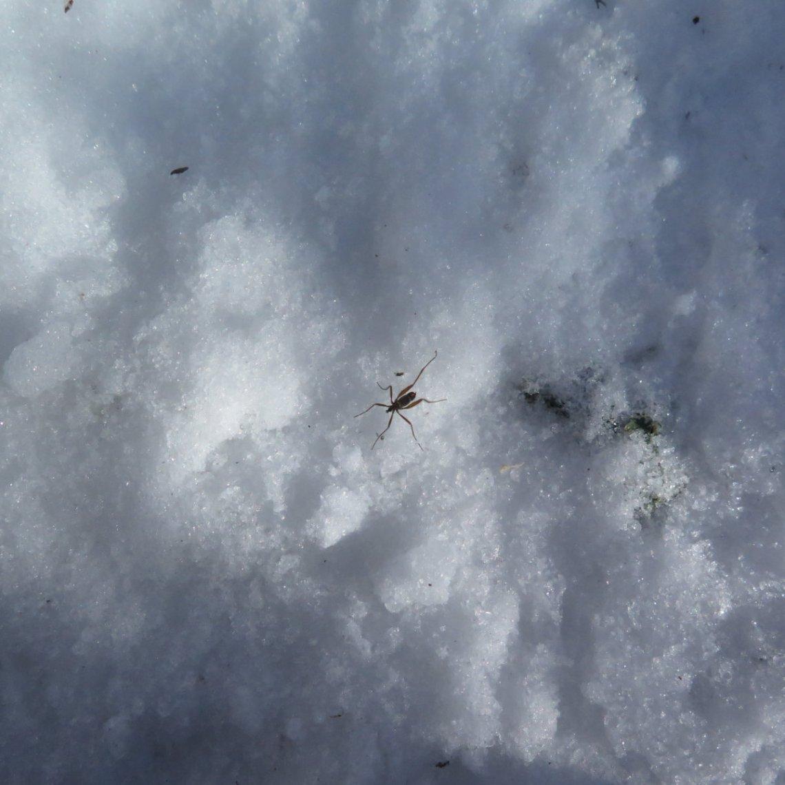 20181212-Israel-Bug