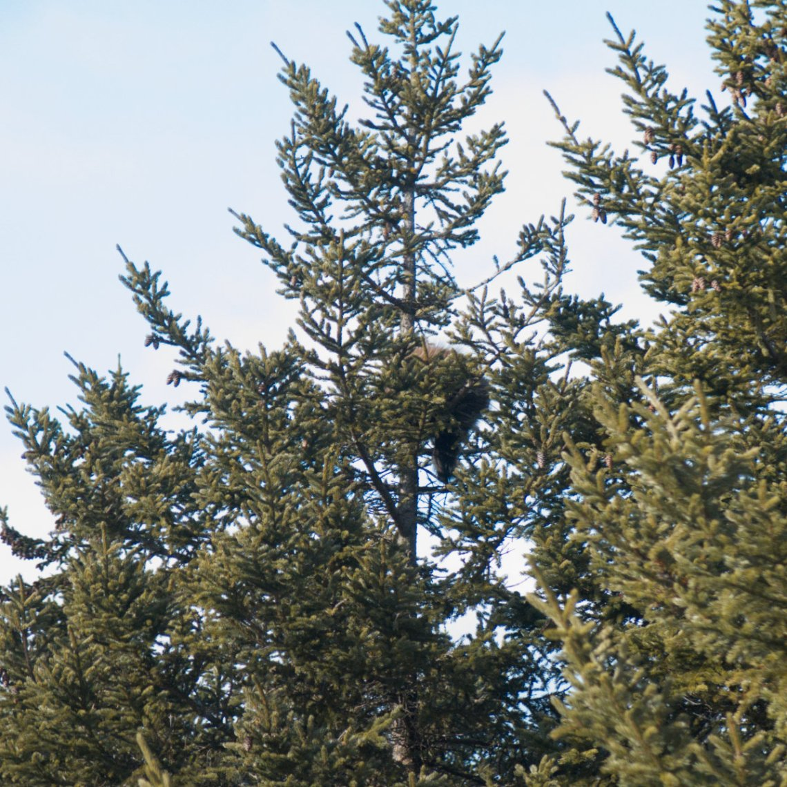 Belknap-20181206-Porcupine-Tree