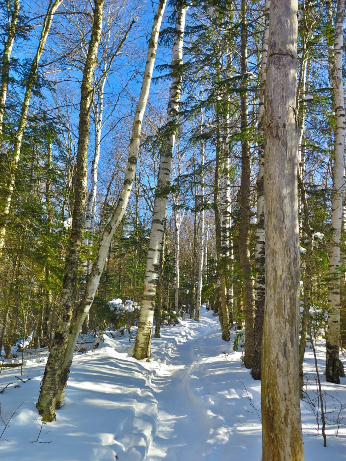 Moosilauke-Trail3-20190117