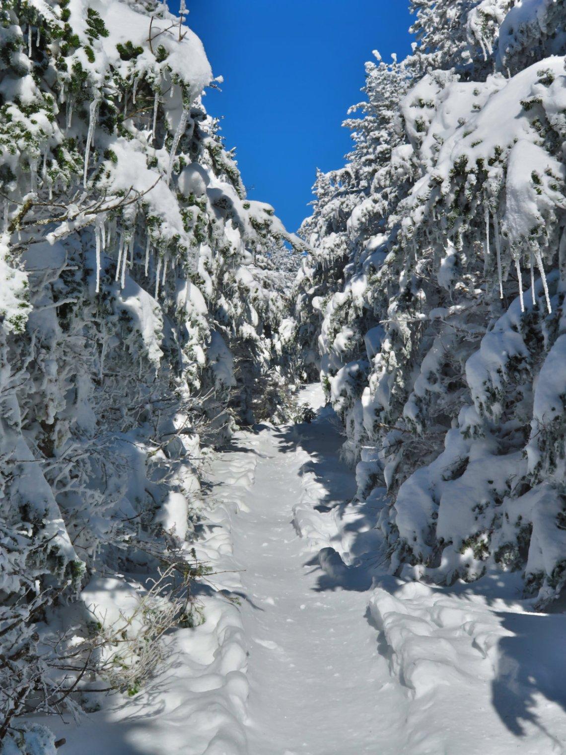 Moosilauke-Trail5-20190117