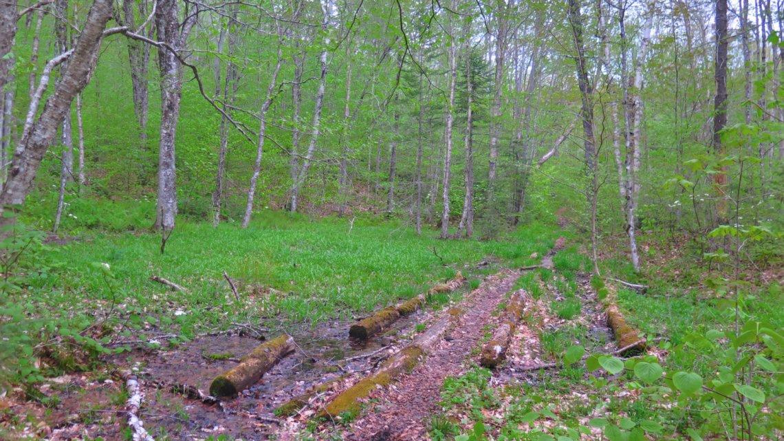 Smarts-Trail-Glade-20190527
