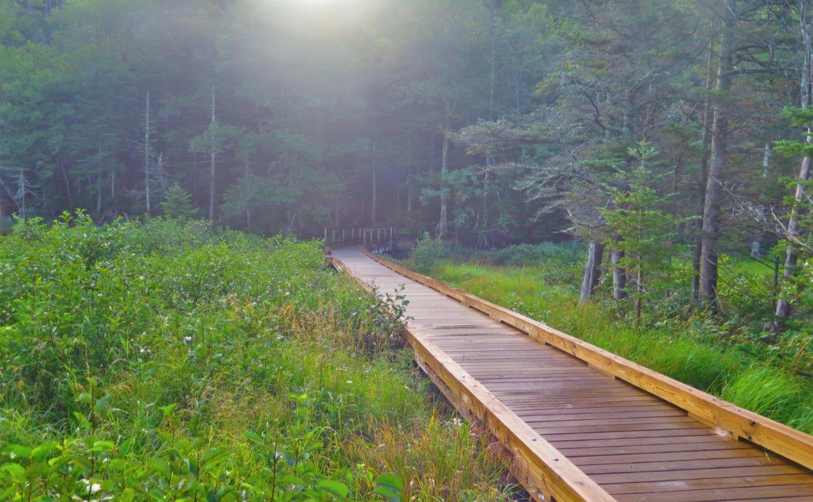 Lost-Pond-Bridge-Wildcat-20190822