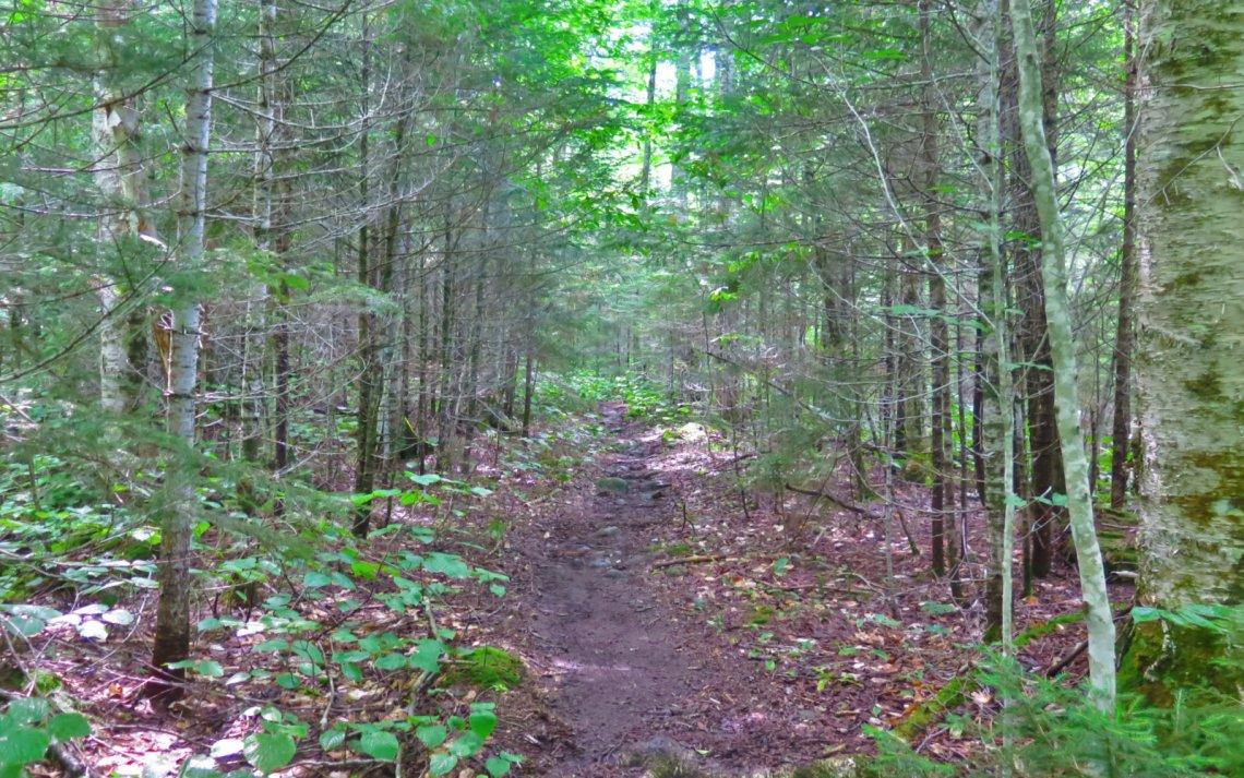 Trail_Owls_Head-2019-08-10