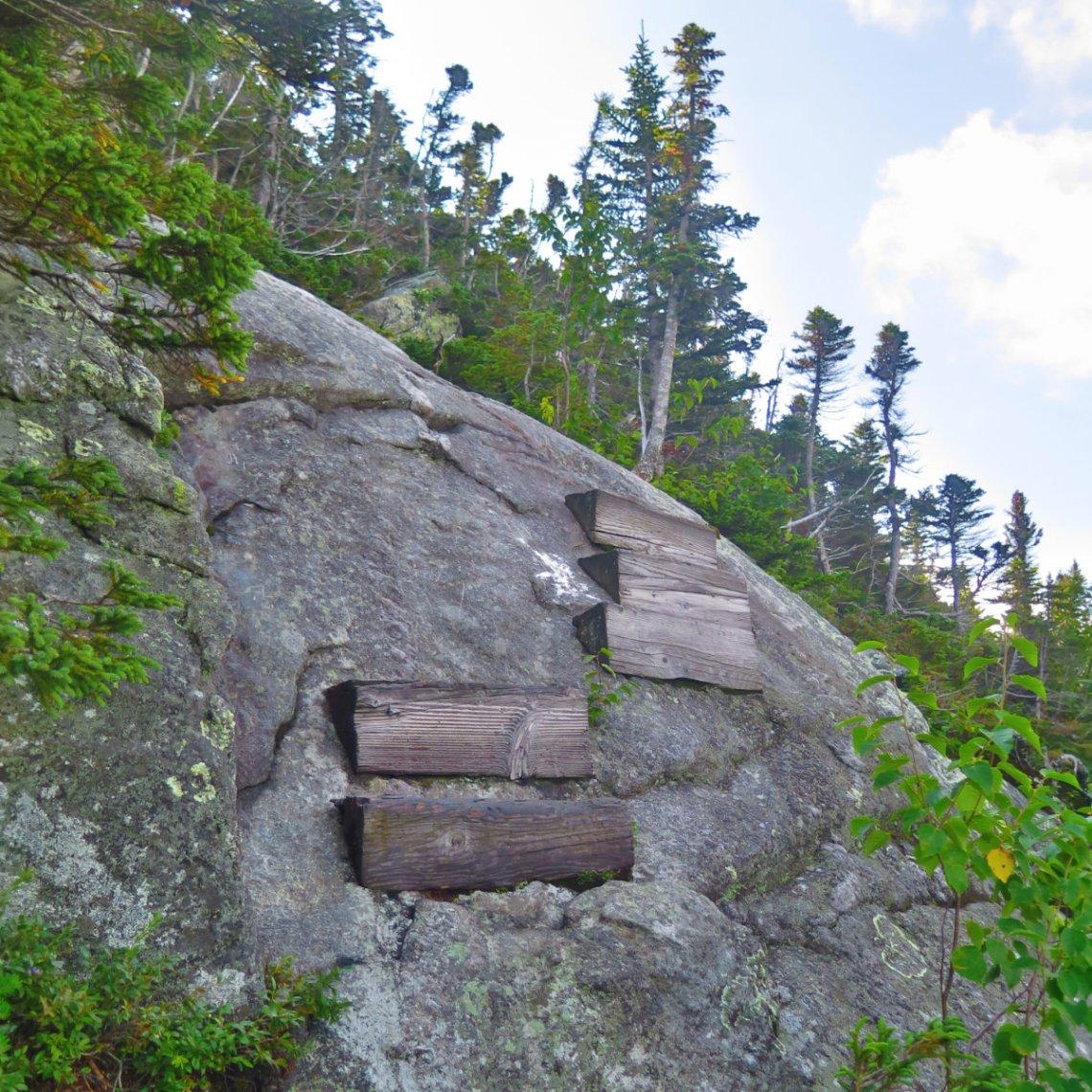 Wood-Step-Trail-Wildcat-20190822