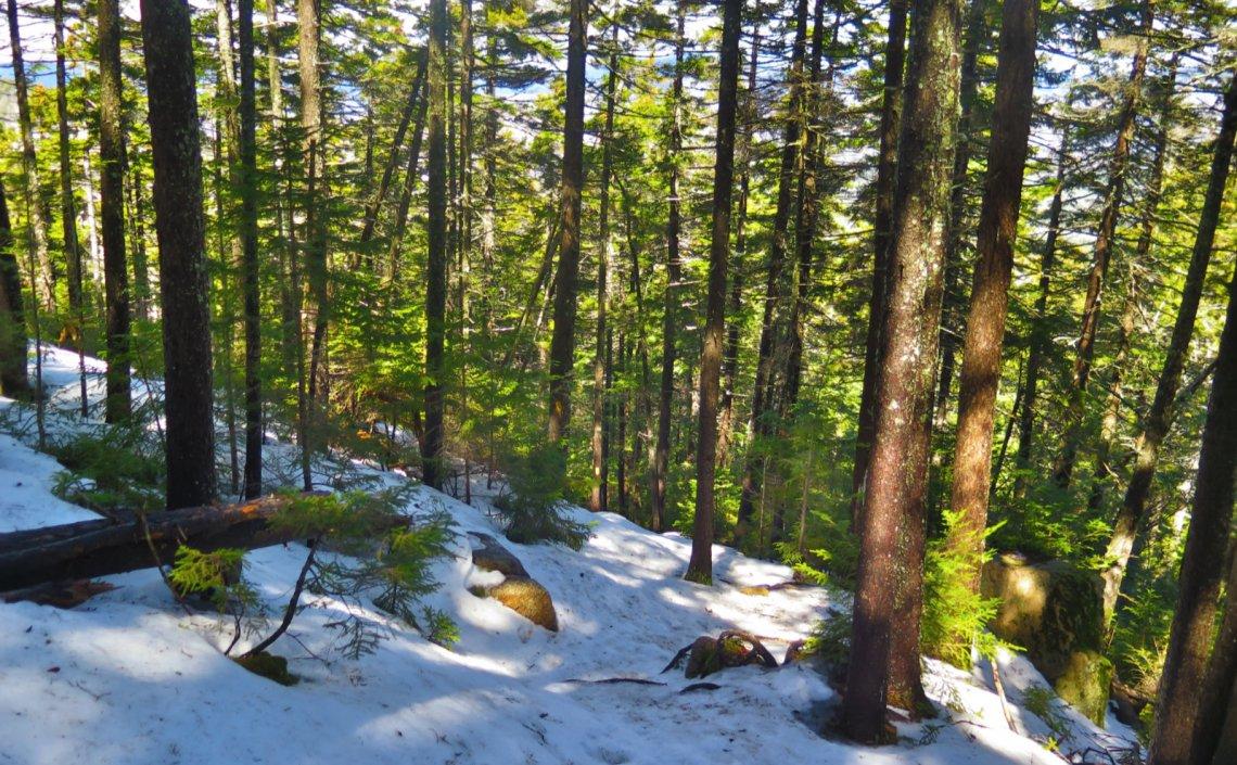 UNH-Steep-Downhill-20200404