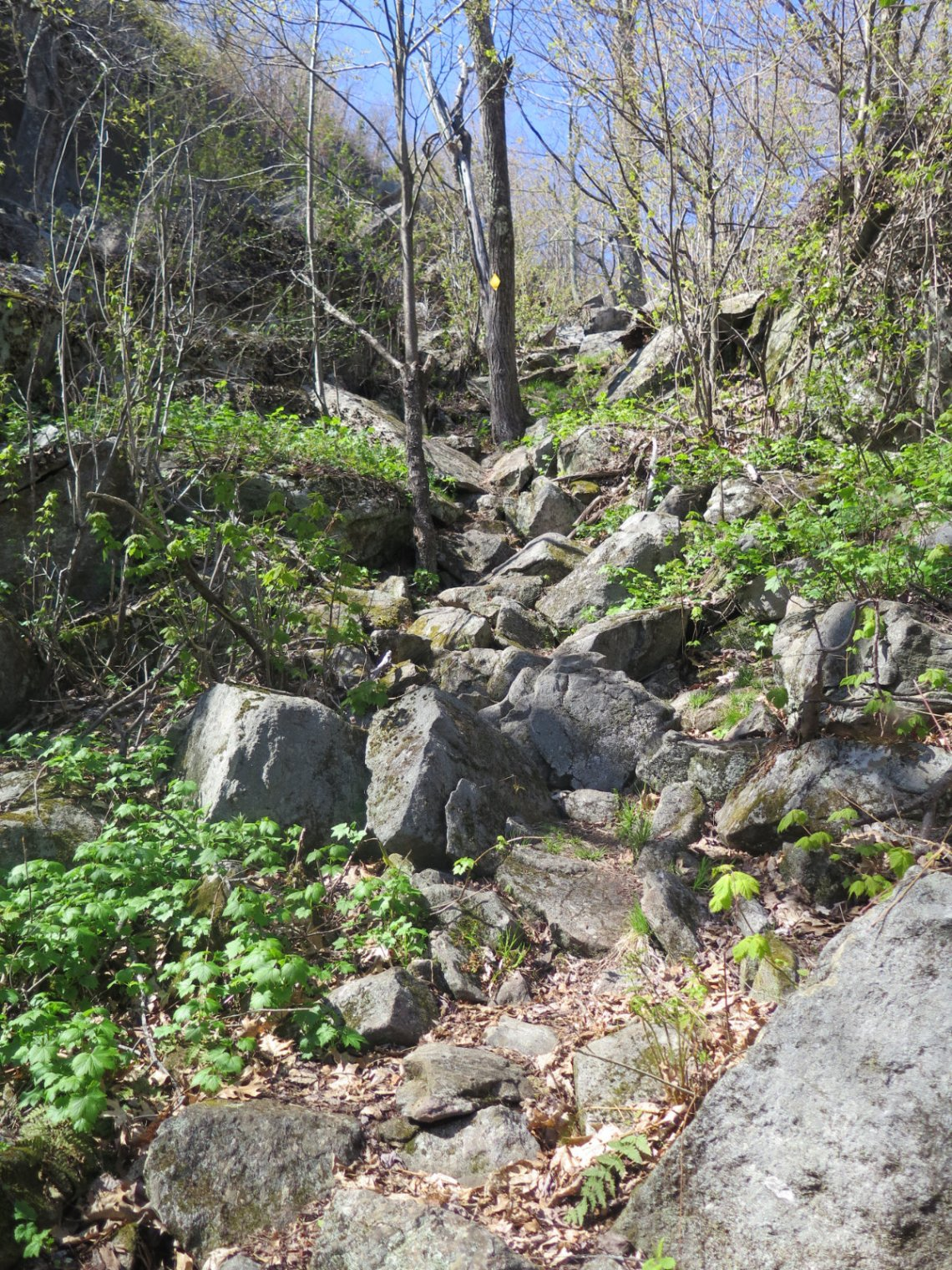 03-Crotched-Rocky-Trail-20200514