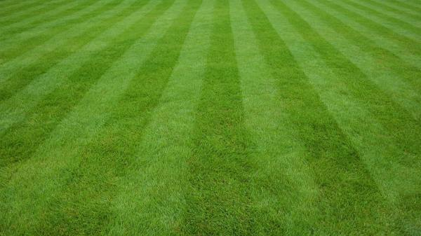 lawn care solutions - protech property