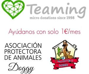 Por solo 1€ puedes ayudar a la Protectora Doggy