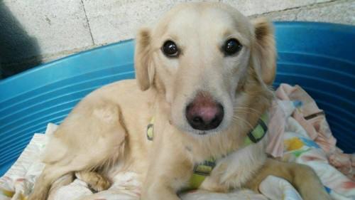 adopta bambú, mestizo en Sevilla