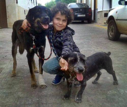 Teddy y Chico adoptados