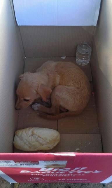 kira cachorro en adopción rescate