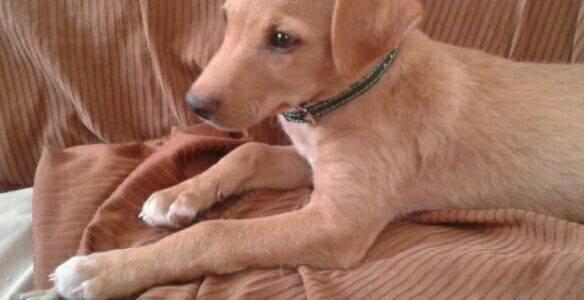 Kira Preciosa Cachorra Mestiza