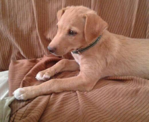 kira cachorro en adopción2