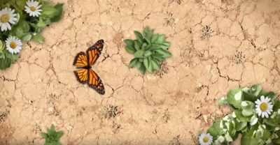 Protéine bio en poudre: présentation en vidéo en 55 secondes