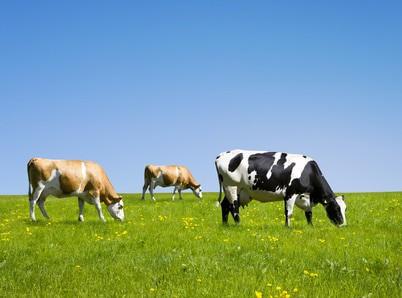 Différences: Concentré, isolat de protéines de lait et un concentré, isolat de protéines de lactosérum