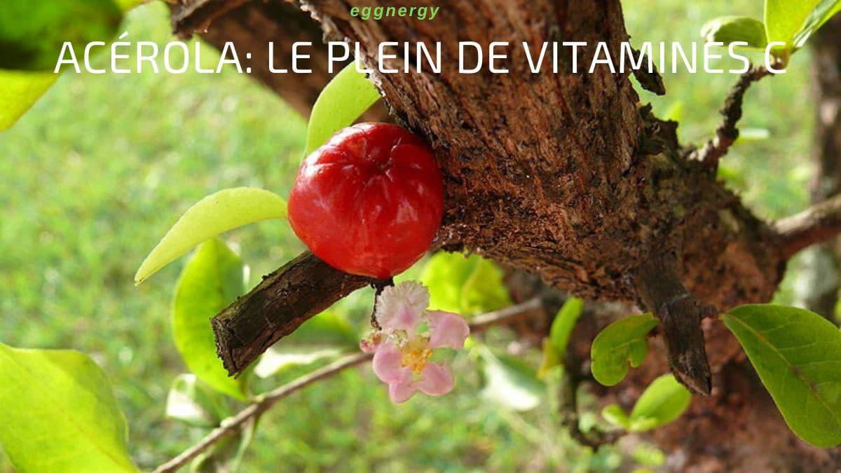 Acérola: le plein de vitamines C
