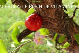 acérola fruit