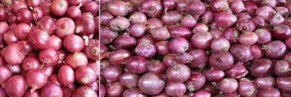 India lose onions