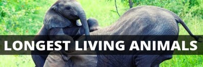 Top 10 Animals that Live the Longest