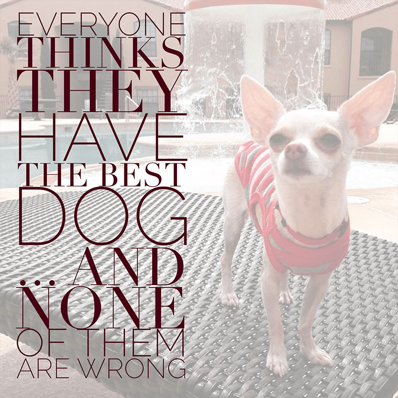 Lovers Images Wallpapers With Quotes 19 Relatable Dog Quotes That Will Warm Your Heart Proud