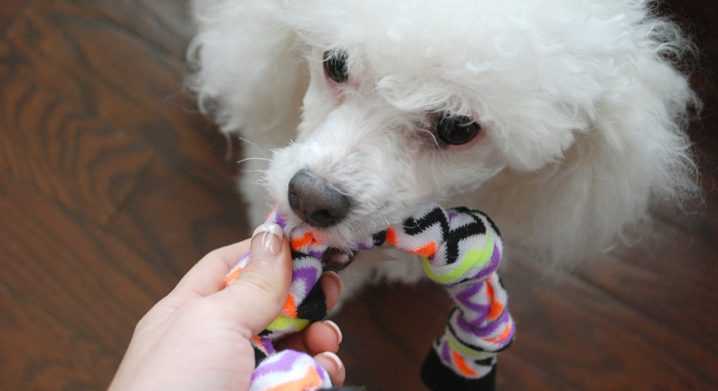 NoSew DIY Dog Toys 4 Ways To Turn Old Socks Into Puppy Play