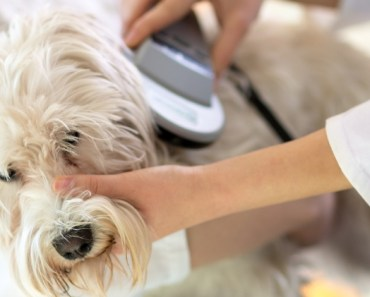 Microchips are a great resource for helping lost dogs find their way back home. But it's not enough to simply chip your pets and move on. Find out more on National Check Your Chip Day!
