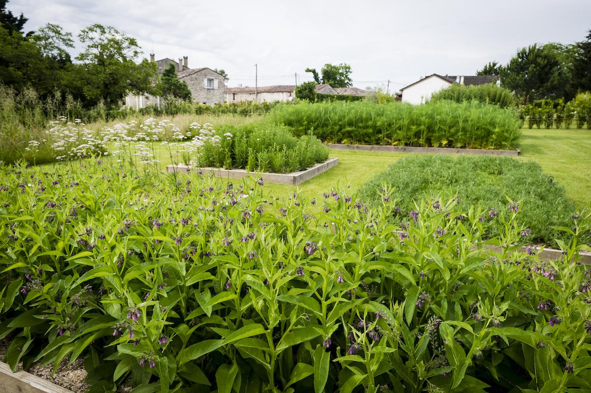 weingut weingüter domaine weine frankreich weinanbau weinanbaugebiete weinsorten weinproduktion weinberge winzer rebberge rebsorten weinregionen