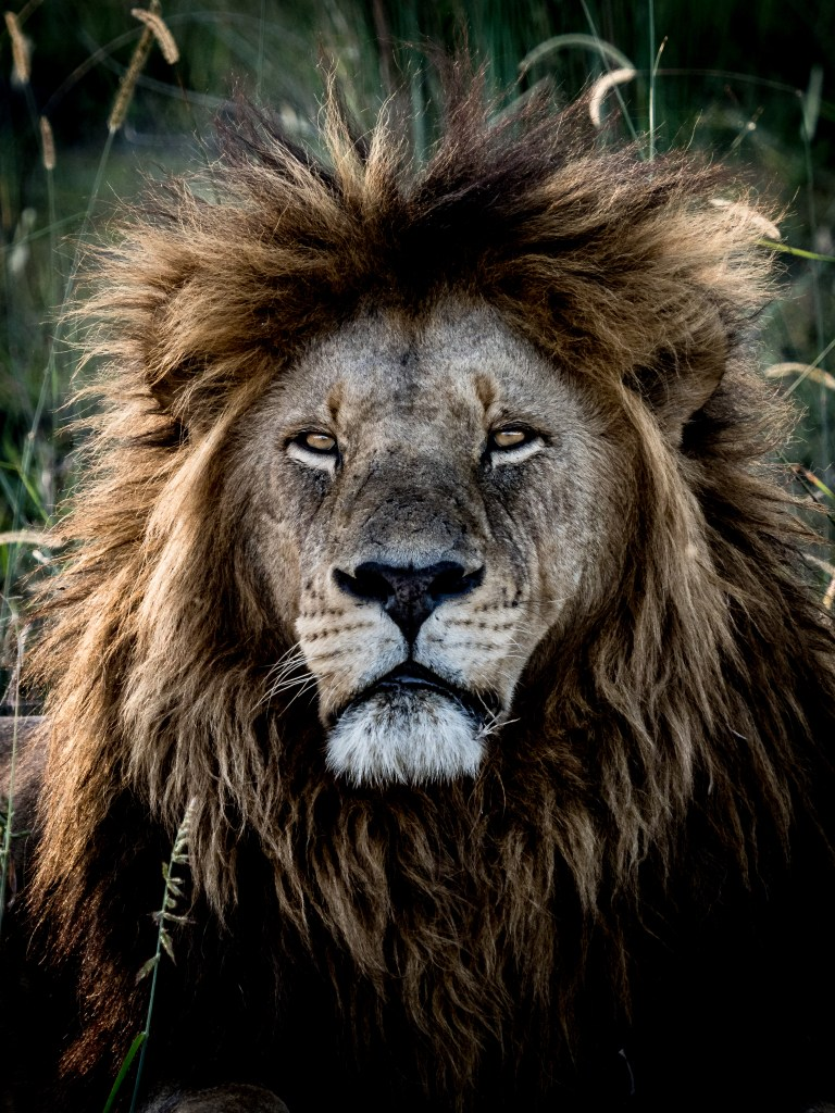 © Nick Leuenberger Wilderness Safaris